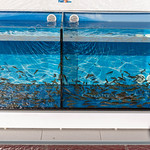 Knabberfische für Pediküre eines Fisch Spas in Aquarien thumbnail