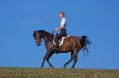 Basim_OS180130 (OliverSeitz) Tags: elbasim wachlarz elda arabian vollblutaraber pferd tier