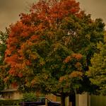 Falling into Autumn thumbnail