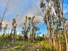 Rainbow over burn area 20181017 (Kenneth Cole Schneider) Tags: florida miramar westmiramarwca