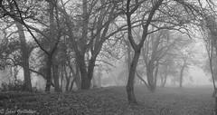 Morning Mist 2 (Johan Grobbelaar) Tags: eersterivier landskap misty
