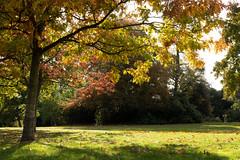 Autumn 2018 in south London | Crystal Palace-16 (Paul Dykes) Tags: london england unitedkingdom gb uk crystalpalace autumn fall autumncolours fallcolors