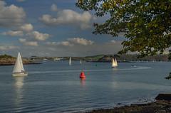 Catching the Breeze (suerowlands2013) Tags: plymouthsound mtedgecumbe devon cornwall sailing yachts bluesky clouds sunshine bluesea drakesisland autumn