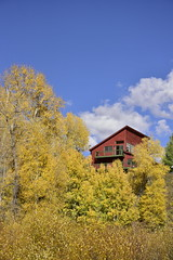 CLIMBING HOUSE (concep1941) Tags: structures buildings forest aspen autumnleaves sky rico