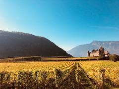 Château d'Aigle dans un écrin d'or (timinou_1) Tags: fabuleuse