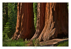 Bachelor's View (Max Angelsburger) Tags: vereinigtestaatenvonamerika unitedstatesofamerica usa visittheusa us westcoast california yosemite september 2018 national park giantsequoias wawone bachelor three graces