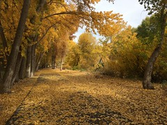 IMG_2814 (August Benjamin) Tags: provo provoriver provorivertrail fall utah mountains provocanyon fallcolors autumn trees leaves orem utahvalley jogging