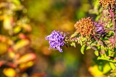 Geschenkband (Friedhelm Dötsch) Tags: blümkes gruga blumen essen deutschland flowers germany
