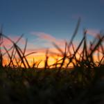 Dans l'herbe le soir thumbnail