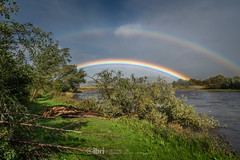 Storm Ali - 19 Sep 2018 - 26 (ibriphotos) Tags: storm stirling riverforth tree rainbow weather wallacemonument forthvalleycollege