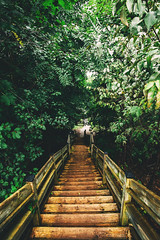 new views (viewsfromthe519) Tags: green forest ontario canada tall trees path canadian nature london byron springbank park stairs wooden steps