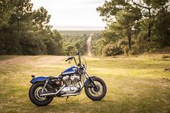 MOR_2742 (DamZs) Tags: harley davidson sportster 883 1200 bobber moto motor motorcycle nikon d610 d750 50 50mm 50mm18 full frame ff plein format custom