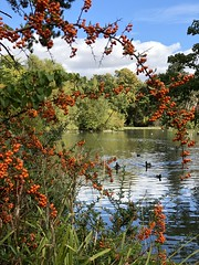 (BiggestWoo) Tags: autumn wet moist lake grimsby park people's people flowers flower bushes bush water