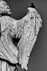 _7107693 (Marco Ambrosini Fotografo) Tags: approved statue angeli angels roma rome pontesantangelo wings ali uccelli birds piccioni gabbiani seagull pigeons religion religione blackandwhite biancoenero silhouette arte art storia history trip gita città city bridge ponte