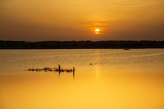 (nadiaorioliphoto) Tags: tramonto sole sun gold giallo yellow water acqua lagoon landscape paesaggio