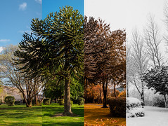 Spring, Summer, Fall and Winter