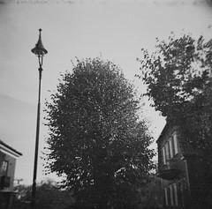Tree (rotabaga) Tags: sverige sweden svartvitt göteborg gothenburg blackandwhite bw bwfp mediumformat mellanformat 120 6x6 diana lomo lomography caffenol diy