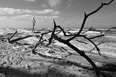 Weststrand Darf (karstenzschache) Tags: schwarzweis blackandwhite darf ostsee strand beach balticsea