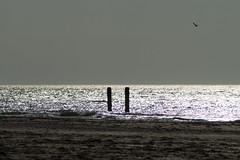 Seaside (MartijnMol1976) Tags: haamstede burghhaamstede zee sea zonsondergang horizon natuur nature zeeland provincie nederland netherlands bird seagul zeemeeuw natuurgebied martijnmol sony a58 sonya58 tamron tamron1750 tamronspaf1750mmf28xrdiiivcasphericalif evening avond