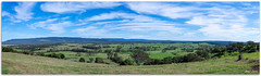 Dairy Farming Country (Bear Dale) Tags: dairy farming country ulladulla southcoast new south wales shoalhaven australia beardale lakeconjola fotoworx milton nsw nikon d850 photography framed nature nikkor afs 1424mm f28g ed if nikkorafs1424mmf28gedif green paddocks cows milking pasture paddock grass sky blue clouds