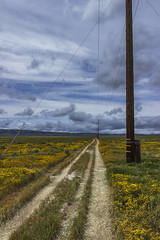 Road Along the Lines (Z. Abbey) Tags: canon t3i canont3i carrizoplains carrizoplainsnationalmonument nationalmonument wildlands california nature outdoors flowers centralcalifornia superbloom blm outdoor clouds cloudsstormssunsetssunrises landscape landscapesdreams