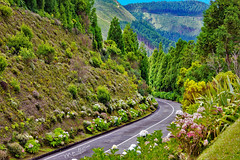 Floral Mountain Road (mikederrico69) Tags: portugal azores road highway mountains plants green scenic panaramic europe flowers trees summer vacation island travel trip exploration meditation relaxation forest woods nature garden