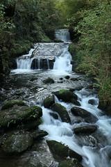 Watersmeet (Lady Tottington) Tags: watersmeet lynmouth devon woodland