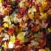 Carpet of leaves - Tapis de feuilles