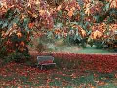 Autumn Bench Scene (amarilloladi) Tags: northwest pacificnorthwest washington quinaultlake quinaultwa hbm leaves fall autumn bench benches benchmonday