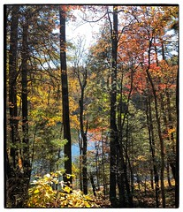 Anglų lietuvių žodynas. Žodis backwoods reiškia n pl miško tankumynas, tankmė lietuviškai.