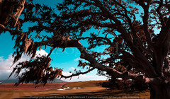 0045_golf_pb_california_999p9 (isogood) Tags: pebblebeach monterey golf green fairway golfcourse links california usa coastline carmel