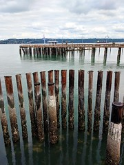 old posts (ekelly80) Tags: tacoma washington august2018 summer rustonway commencementbay pugetsound water view posts wood decay ruins abandoned dock pier