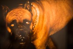 Pictures from Home (Thomas Hawk) Tags: america bayarea larrysultan museum picturesfromhome sfbayarea sfmoma sanfrancisco sanfranciscomuseumofmodernart usa unitedstates unitedstatesofamerica dog california us