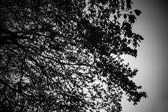 Untitled (agataurbaniak) Tags: leica m monochrom leicamonochrom typ246 type246 246 monochromatic blackandwhite blackwhite digital rangefinder canon ltm m39 leicathreadmount 50mm 50 f14 14 canon50mmf14ltm red filter redfilter