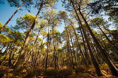 Congregate (Stray Toaster) Tags: brownsea island trees 14mm