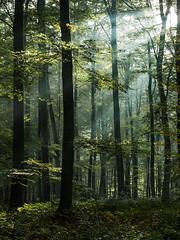autumn (de_frakke) Tags: bos wood sunrays zonnestralen autumn herfst