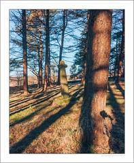 Wayside cross in Shillito wood (G. Postlethwaite esq.) Tags: curbaredge derbyshire shillitowood drystonewall grass landscape outdoor photoborder shadows sky trees waysidecross winter