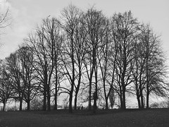 trees (Darek Drapala) Tags: trees tree panasonic poland polska panasonicg5 park bw blackwhite blackandwhite nature lumix light