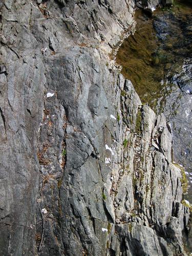 Phyllite (Precambrian; outcrop along Cabin Creek, Gallatin National Forest, Montana, USA) 11