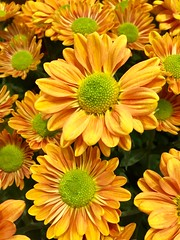 Bright Flowers (stashheap) Tags: brightcolors flowers