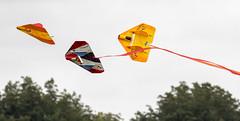PiggottFunFly-20181013-0083 (Sam W. Hummelstein) Tags: airplanes controlled fly fun piggott rc