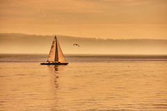 silence (flowerikka) Tags: atmosphere bird boat eveninglight eveningmood fog golden lake mist sailor see silence sky sunset sonnenuntergang boot segelboot wasser