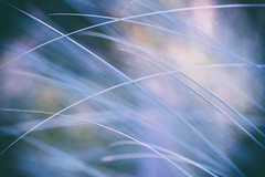 /(-I// (_elusive_mind_) Tags: grass gras colorfineart blue emotions simplicity sehnsucht