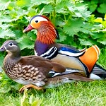 Mandarin ducks under the bird feeders at Calke Abbey thumbnail