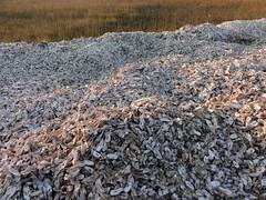2018 05 09 151 Bowens Island, SC (Mark Baker.) Tags: 2018 america baker bowens carolina east island mark may north sc south us usa coast dusk outdoor photo photograph picsmark pile shell spring states united