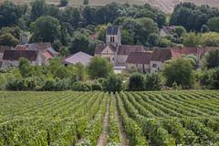 Saint-Agnan (ClydeHouse) Tags: champagne vineyard aisne saintagnan byandrew vignoble 02 hautsdefrance france