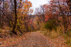 Sweater Weather - Red Leaves (aaronrhawkins) Tags: fall leaves leaf autumn red orange change season cool temperatures trees road path dirt northfork canyon provo utah weather scenic nature natural aaronhawkins