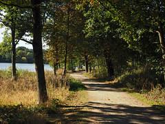 path by the lake (Johnson Cameraface) Tags: 2018 october autumn olympus omde1 em1 micro43 mzuiko 1240mm f28 johnsoncameraface yorkshiresculpturepark yorkshire ysp nature path tree lake