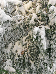 68270462 (aniaerm) Tags: snow ice frost