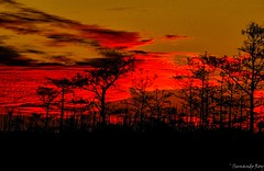 Fiery red (sunandoroyphotography) Tags: red fiery peaceful everglades florida zen nationalpark travel travellife